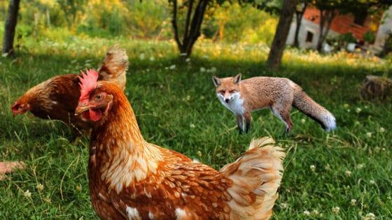 Ataque a la granja: USD 450.000 fueron sustraídos de la plataforma DeFi Balancer