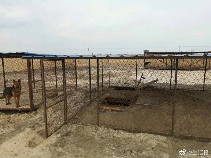 Cryptocurrency mining operation under a dog kennel