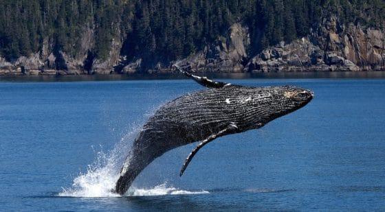 Cazadores de ballenas: ¿dónde se comercian más bitcoins?