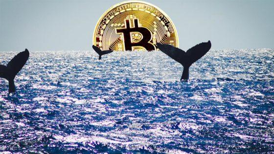 Bitcoin no está concentrado en pocas manos, pero las ballenas siguen acumulando