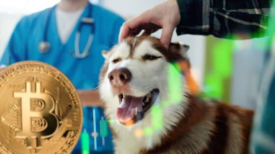 El Salvador construirá hospital veterinario con ganancias de bitcoin